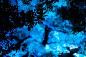日比谷公園のビーズハーバリウム