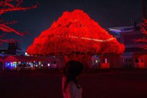 TOKYO MEGA ILLUMI 2019-2020(東京メガイルミ)