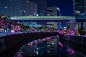 目黒川みんなのイルミネーション2019