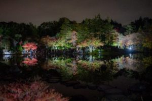 国営昭和記念公園の黄葉紅葉まつり2019-秋の夜散歩