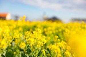 三浦半島の農と海の体験パーク長井海の手公園・ソレイユの丘