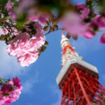 東京タワーでポートレート写真撮影した作例