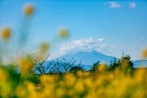長井海の手公園・ソレイユの丘