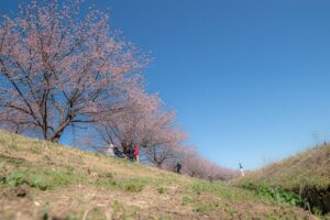 北浅羽桜堤公園