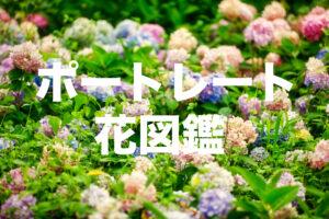 【作品集】ポートレート花図鑑Vol.001