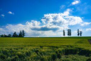 セブンスターの木 & マイルドセブンの丘